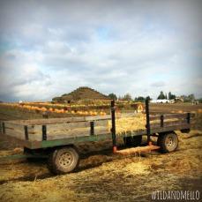 Sauvie Island Farms